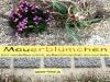 Mauerbluemchen finden stets neuen Boden
