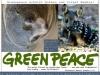 Sauberer Himmel Chemtrails Greenpeace 2