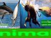 Animals-Banner