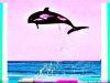 Delphin-in-Farbe