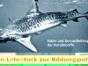 Lehrstück-zur-Bildungspolitik-Tigerhai