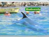 Sauberer-Himmel-Understanding-Biodiversity