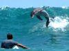 Surfer-und-Delphin