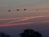 2008-10-24-morgens-8-00-uckermark-1