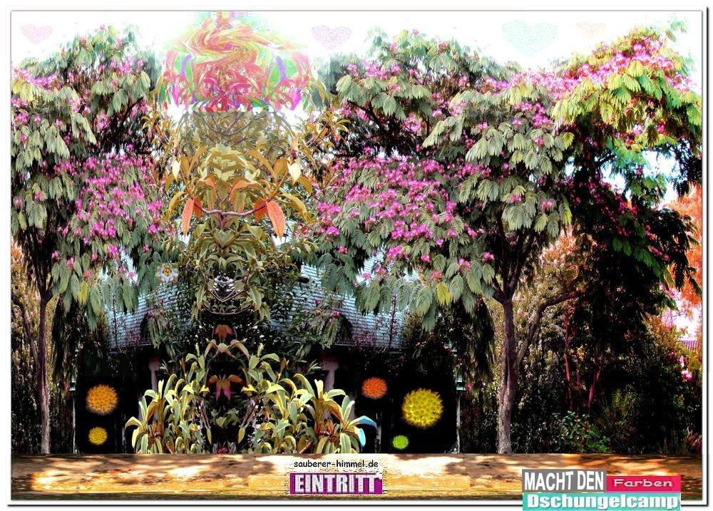 Dschungelcamp der anderen Art