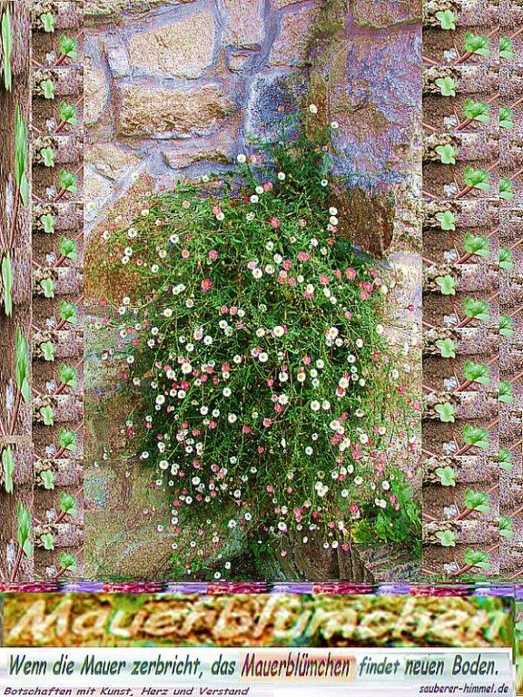 Mama Mauerbluemchen