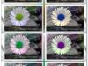 Mauerbluemchen bunt