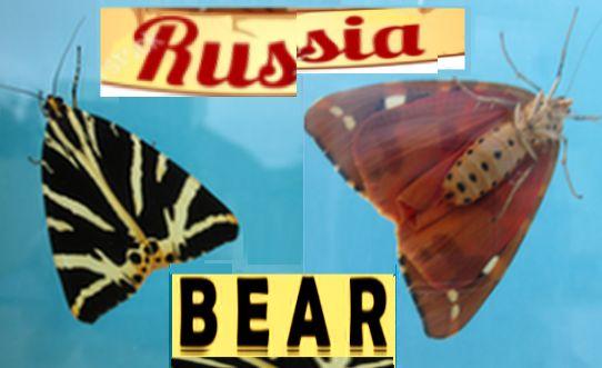 Russischer-B%C3%A4r