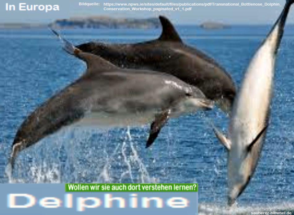 Delphine-in-Europa