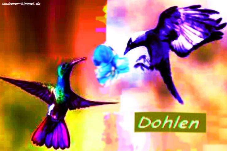 Dohlen-1