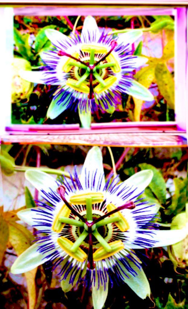 Blumen-Rechteck-622x1024