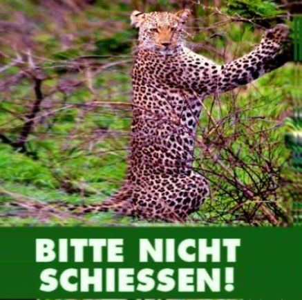 Tiere-1