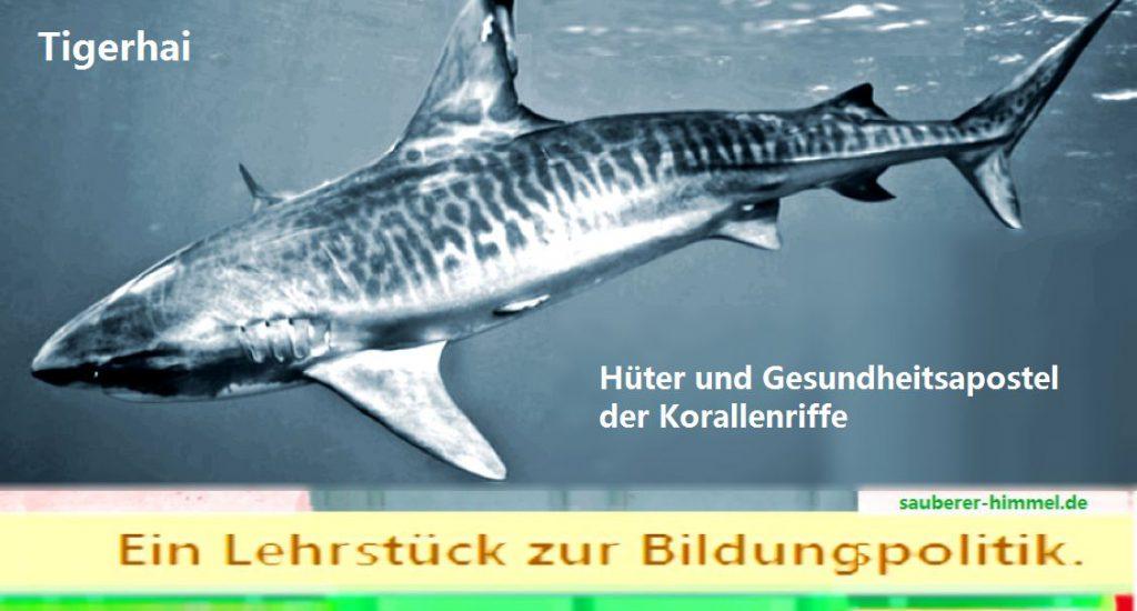 Lehrst%C3%BCck-zur-Bildungspolitik-Tigerhai-1024x550